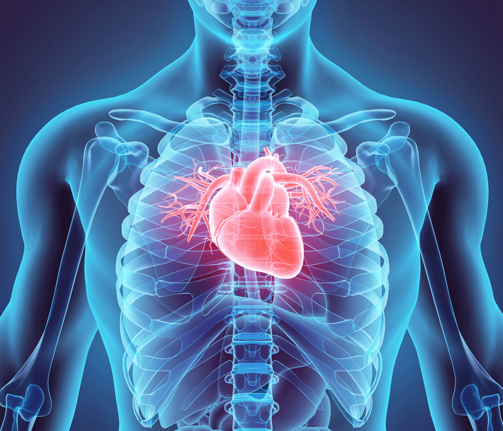 cardiovascular health for living with erectile dysfunction